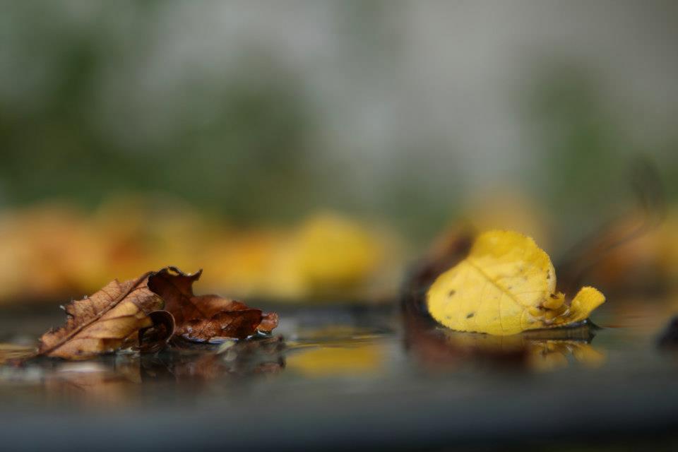 Les feuilles mortes se ramassent à la pelle…