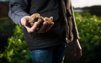 Il est temps de penser à planter vos pommes de terre, échalottes et oignons…