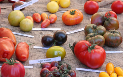 Le Brussels Tomato Festival 2021 APPROCHE…